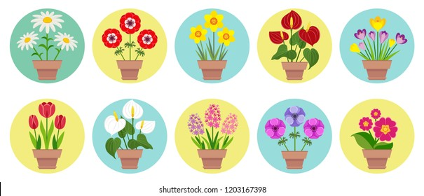Home flowers in the pots. Set of icons in flat style. Tulip, narcissus, anthurium, anemone, hyacinth, crocus, primrose, daffodil, chamomile.