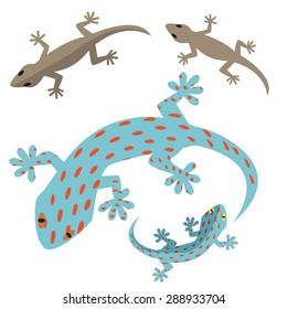 Home lizard and gecko lizard in flat style on white background,. top view