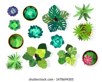 Home plant set. Cactus, green leaves, pot, top view. Plant concept. Vector illustrations can be used for interior design, gardening, housing