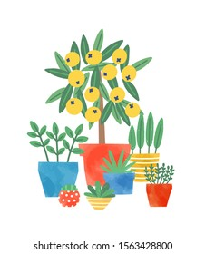 Home plants in ceramic pots flat vector illustration. Lemon tree and succulents. Domestic decorative greenery. Flower growing, plants care. Multicolored flowerpots isolated on white background.
