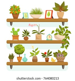 Home plants and decorative flowers in pots, standing on the shelves. Garden flowerpot and green interior house. Vector illustration
