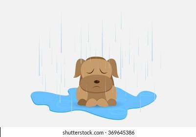 Homeless dog in rainy day