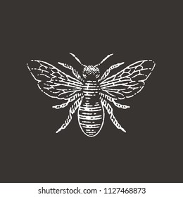 Honey bee. Black background. Hand drawn engraving style illustrations.