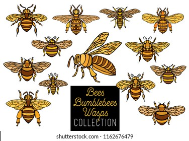 Honey bee bumblebees wasps set sketch style collection insert honeybee wings emblem symbols white background Hand drawn vector color illustration.