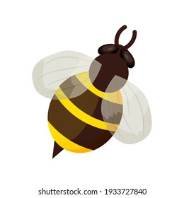 Honey bee in cartoon style isolated on white background. Detailed insect, bumble, bug with stripes. Cute clipart, decoration or design element