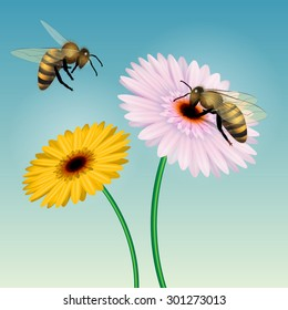 Honey bee collecting nectar on a flower. Isolated on white. Vector illustration