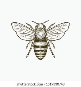 Honey Bee Drawing Engraving Illustration