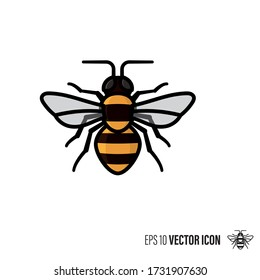 Honey bee line and color filled outline icon vector illustration. Beneficial insect symbol.