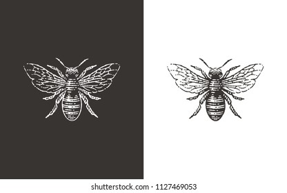 Honey bee logo. Hand drawn engraving vintage style illustrations.
