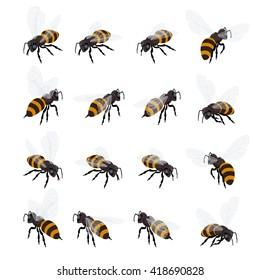 Honey bee vector set. Flat 3d vector isometric illustration. Honey natural healthy food production. Environmentally friendly product.