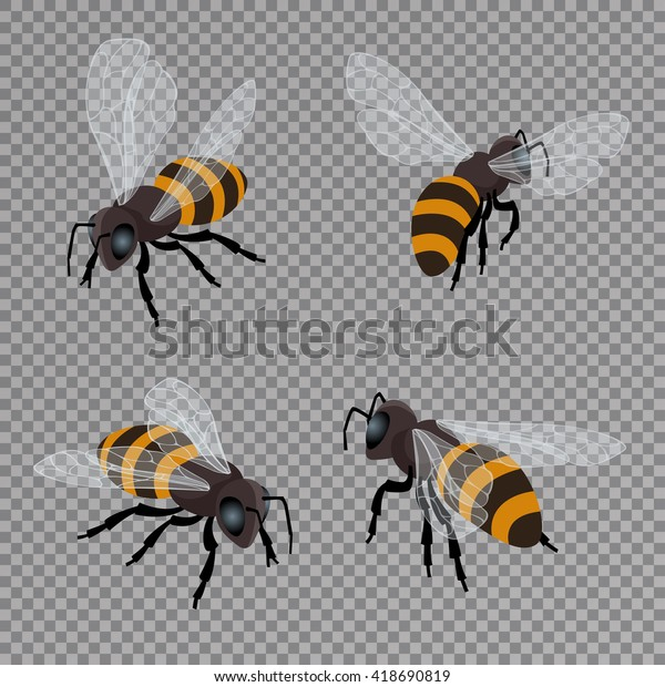 Honey bee vector set. Flat 3d vector isometric illustration. Natural healthy food production. Environmentally friendly product.