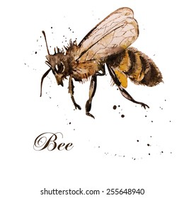 honey bee, watercolor, isolation on a white background. Hand drawing. Vector.