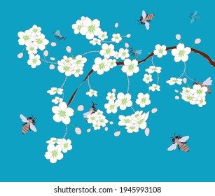Honey bees pollinate cherry flowers. Spring blossom cherry branch. Pollination