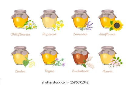 Honey of different type set. Glass jar with Acacia, Sunflower, Buckwheat, Linden, Thyme, Lavender, Rapeseed, Wildflowers honey. Vector illustration of a natural healthy sweet in cartoon flat style.