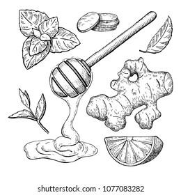 Honey, ginger, lemon and mint vector drawing. Wooden spoon, honey drop, hearb leaf and fruit slice sketch. Engraved illustration with tea ingredient, alternative medicine Label, icon, packaging design