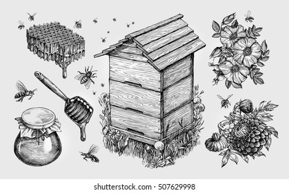 Honey, mead. Beekeeping, apiculture, bees sketch vector illustration