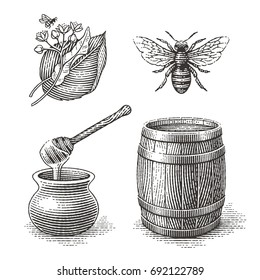Honey pot, bee, wood barrel and Linden tree branch with flowers and flying bee. Hand drawn engraving style illustrations set.