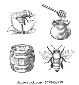 Honey pot and flower, barrel and bee engravings. Beekeeping and flight keeping etching elements, hand drawn honey plant and honeybee, jug with dipper and wood cask
