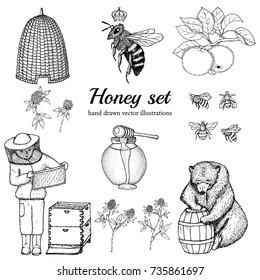 Honey set. Hand drawn vector illustrations