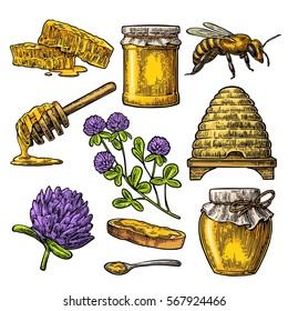 Honey set. Jar, bee, hive, clover, spoon, bee, bread and honeycomb. Vector vintage color engraved illustration. Isolated on white background.