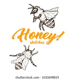 Honey Sketch Bee, Honey Hand Drawn Superfood Organic Products Design, Vector Illustration. Black Outline Engraving Element. Vintage Isolated Vector Illustration