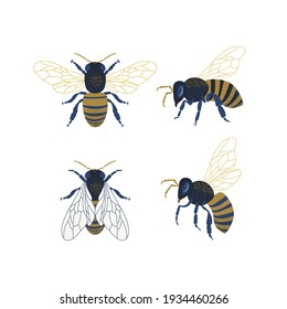 Honeybee clipart collection. Bee vector illustration set isolated on white background. Detailed decorative hand drawn beekeeping design elements.