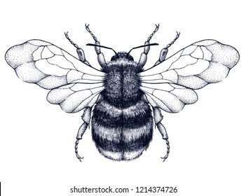Honeybee tattoo. Dotwork tattoo. Mystical symbol of diligence, economy, purity, immortality, fertility and chastity. Black and white tattoo
