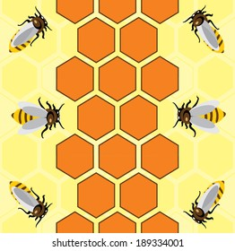 Honeycombs and  bees  vector pattern