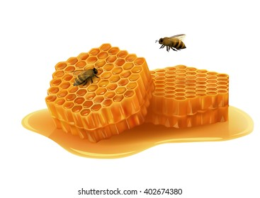 Honeycombs in the shape of hexagon, puddle of honey, flying and sitting bee. Realistic vector illustration on white background.
