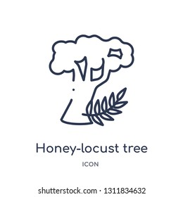 honey-locust tree icon from nature outline collection. Thin line honey-locust tree icon isolated on white background.