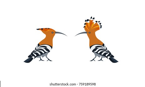 hoopoe vector flat design illustration