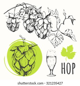 Hop beer set. Vector illustration of branch of hops. Black and white. Sketch design.