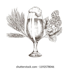 Hop brunch and beer goblet vector illustration, graphic image made by pencil, isolated on white background ale in glossy glass and his main ingredient