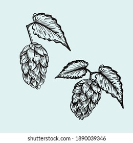 Hop cones and leaves. Vintage engraving style isolated on white. vector illustration.