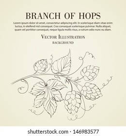 Hop with leafs isolated on biege. Vector illustration.