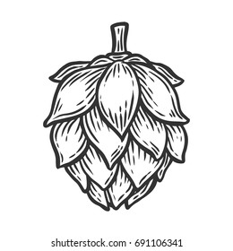 Hop organic herb plant which is used in the brewery of beer. For labels and packaging. Vector engraved illustration. Hand drawn Isolated on white background