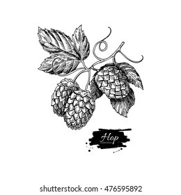 Hop plant vector drawing illustration. Hand drawn black beer hopes with leaves on branch. Vintage isolated object on  white background. Engraved element for label, banner, icon, menu, oktoberfest
