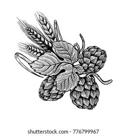 Hop and wheat illustration in engraving style. Design element for beer label, poster, emblem. Vector illustration