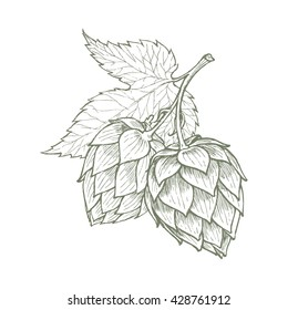 hops beer vector illustration