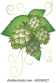hops with leafs isolated on white