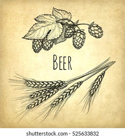 Hops and malt on old paper background. Hand drawn vector illustration. Retro style.