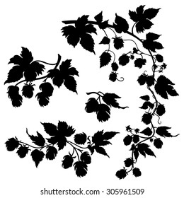 Hops plant branches with hop cones - Vector silhouettes isolated on white
