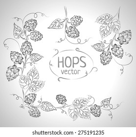Hops vector visual graphic, ideal for beer, stout, ale, lager, bitter labels & packaging etc. Hop is a herb plant which is used in the brewery of beer. Pixel perfect illustration.