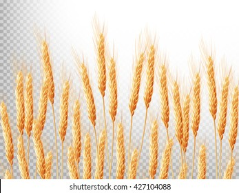 Horizontal background with ears of wheat. Crop illustration. EPS 10 vector file included