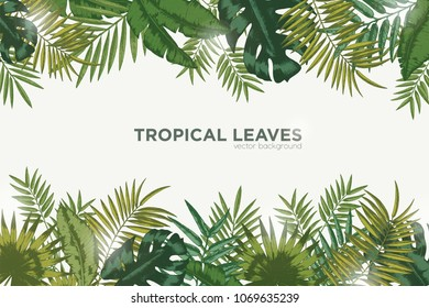 Horizontal background with green leaves of tropical palm tree, banana and monstera. Elegant backdrop decorated with foliage of exotic jungle plants. Natural frame or border. Vector illustration.