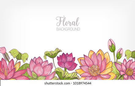 Horizontal banner or floral background decorated with bright colored blooming lotus flowers and leaves at bottom edge. Hand drawn botanical vector illustration for decorative natural backdrop.
