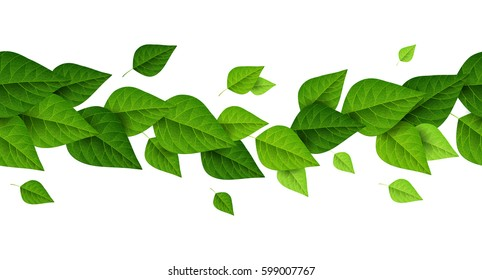 Horizontal border with green leaves on white background. Fresh foliage. Vector illustration. Spring is coming concept, environment and ecology frame.