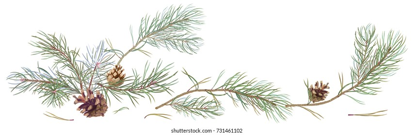 Horizontal border with pine branches and cones, needles on white background, hand digital draw, watercolor style, decorative botanical illustration for design, Christmas tree, vector