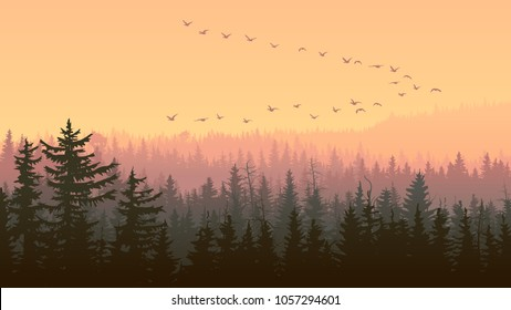 Horizontal illustration foggy coniferous forest with flock of birds at sunset.