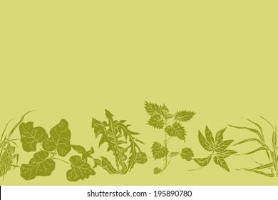 Horizontal seamless pattern various common herbs and weeds, which are used in medicine and cosmetology